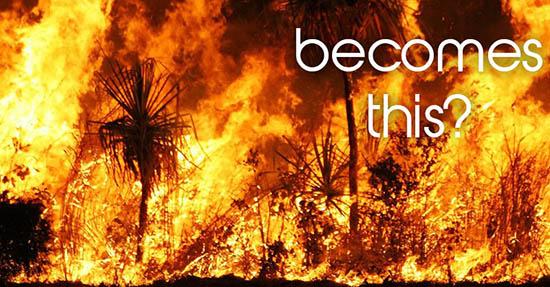 Bushwalking bushfire danger